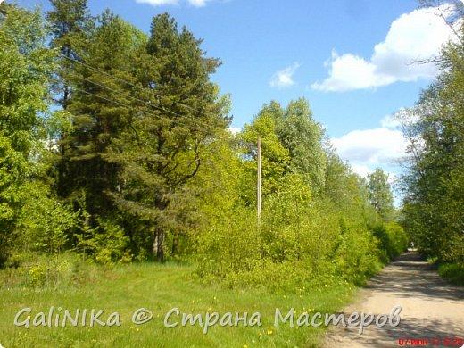 Каким бы лето не было –  в нём есть чему любоваться! В июне, июле и для меня нашлось … Река Луга в Ленинградской области.  фото 8