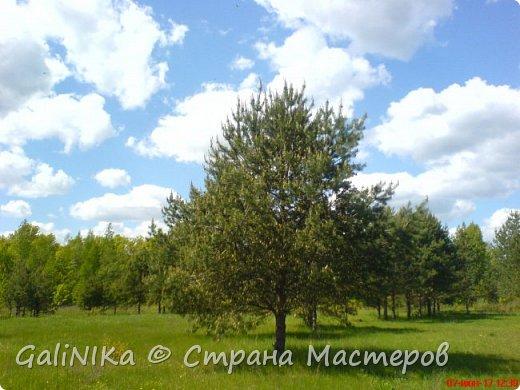 Каким бы лето не было –  в нём есть чему любоваться! В июне, июле и для меня нашлось … Река Луга в Ленинградской области.  фото 13