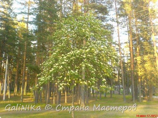 Каким бы лето не было –  в нём есть чему любоваться! В июне, июле и для меня нашлось … Река Луга в Ленинградской области.  фото 19