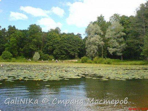 Каким бы лето не было –  в нём есть чему любоваться! В июне, июле и для меня нашлось … Река Луга в Ленинградской области.  фото 45