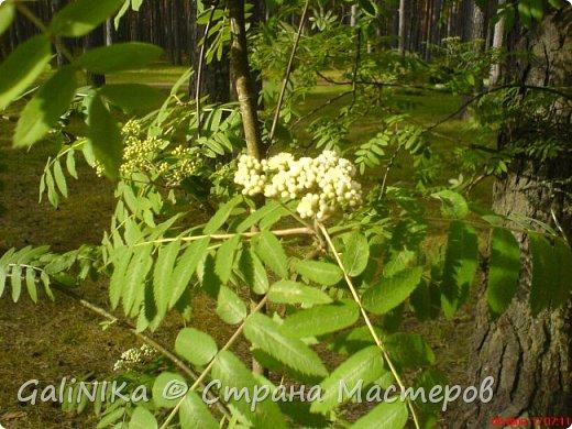 Каким бы лето не было –  в нём есть чему любоваться! В июне, июле и для меня нашлось … Река Луга в Ленинградской области.  фото 17