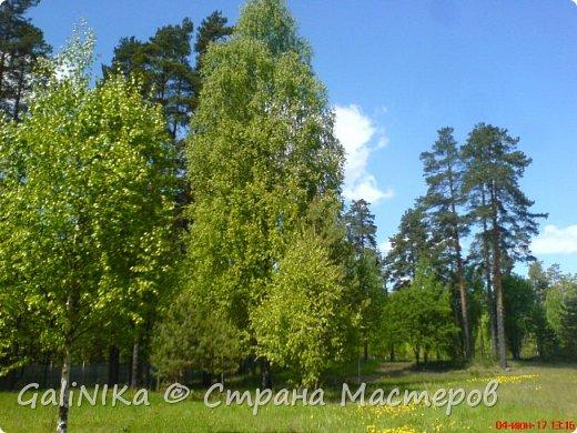 Каким бы лето не было –  в нём есть чему любоваться! В июне, июле и для меня нашлось … Река Луга в Ленинградской области.  фото 16