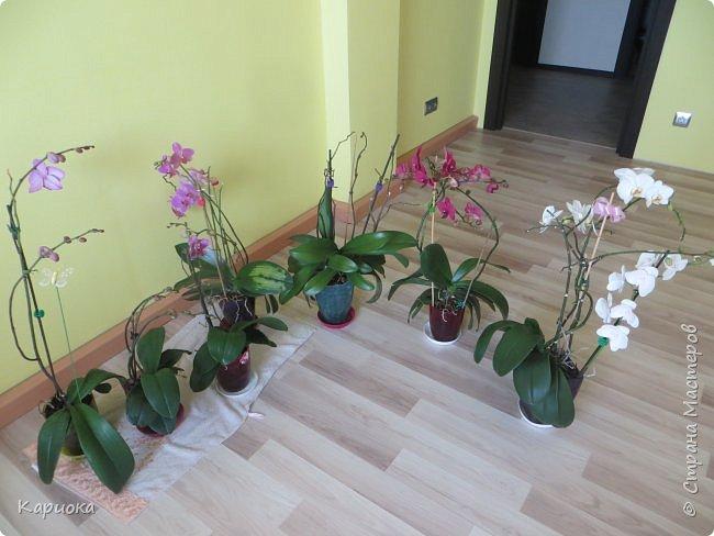 Здравствуйте жители См! Сегодня я к вам не с рукотвроными цветочками а с живыми!  Хочу представить вам мою цветочную любовь! Мои орхидеи))  фото 9