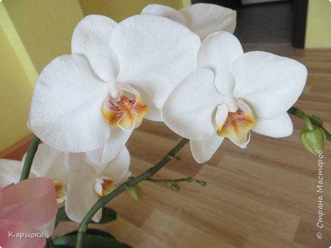 Здравствуйте жители См! Сегодня я к вам не с рукотвроными цветочками а с живыми!  Хочу представить вам мою цветочную любовь! Мои орхидеи))  фото 1