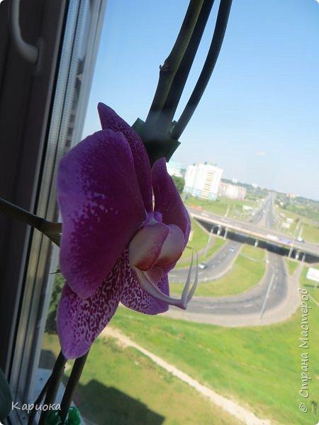 Здравствуйте жители См! Сегодня я к вам не с рукотвроными цветочками а с живыми!  Хочу представить вам мою цветочную любовь! Мои орхидеи))  фото 11