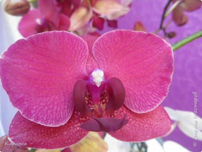 Здравствуйте жители См! Сегодня я к вам не с рукотвроными цветочками а с живыми!  Хочу представить вам мою цветочную любовь! Мои орхидеи))  фото 14