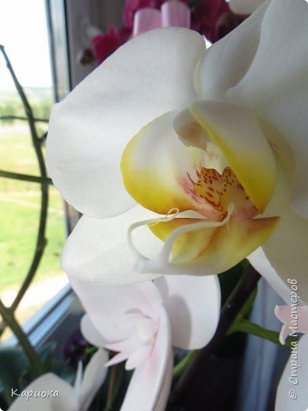 Здравствуйте жители См! Сегодня я к вам не с рукотвроными цветочками а с живыми!  Хочу представить вам мою цветочную любовь! Мои орхидеи))  фото 18