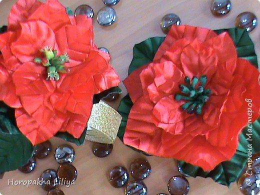 Пуансеттия на обруч и как украшение новогоднего праздничного стола фото 2