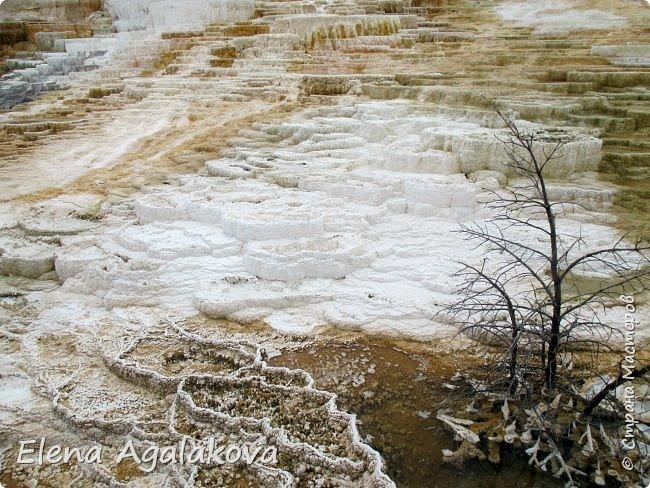 Продолжаю делится впечатлениями от поездки в Йе́ллоустон (Yellowstone National Park)— международный биосферный заповедник, объект Всемирного Наследия ЮНЕСКО, первый в мире национальный парк (основан 1 марта 1872 года). Находится в США, на территории штатов Вайоминг, Монтана и Айдахо. Парк знаменит многочисленными гейзерами и другими геотермическими объектами, богатой живой природой, живописными ландшафтами. ( взято из Википедии ) Мы останавливались в кемпингах в палатках. Парк произвел на нас огромное впечатление. Очень хочется поделится с вами красотой которую я увидела. В один фоторепортаж трудно вместить все увиденное поэтому это уже четвертый и будут еще...  фото 21