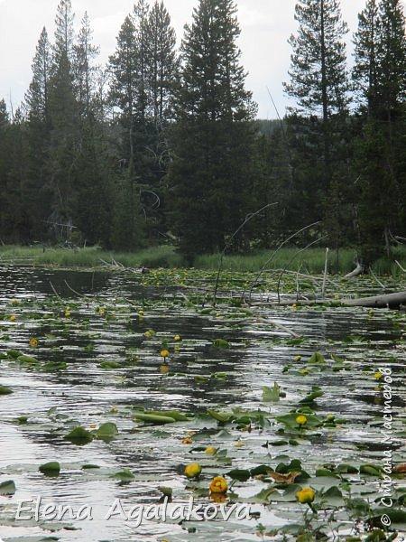 Продолжаю делится впечатлениями от поездки в Йе́ллоустон (Yellowstone National Park)— международный биосферный заповедник, объект Всемирного Наследия ЮНЕСКО, первый в мире национальный парк (основан 1 марта 1872 года). Находится в США, на территории штатов Вайоминг, Монтана и Айдахо. Парк знаменит многочисленными гейзерами и другими геотермическими объектами, богатой живой природой, живописными ландшафтами. ( взято из Википедии ) Мы останавливались в кемпингах в палатках. Парк произвел на нас огромное впечатление. Очень хочется поделится с вами красотой которую я увидела. В один фоторепортаж трудно вместить все увиденное поэтому это уже четвертый и будут еще...  фото 30