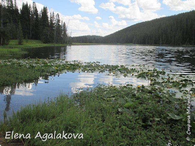 Продолжаю делится впечатлениями от поездки в Йе́ллоустон (Yellowstone National Park)— международный биосферный заповедник, объект Всемирного Наследия ЮНЕСКО, первый в мире национальный парк (основан 1 марта 1872 года). Находится в США, на территории штатов Вайоминг, Монтана и Айдахо. Парк знаменит многочисленными гейзерами и другими геотермическими объектами, богатой живой природой, живописными ландшафтами. ( взято из Википедии ) Мы останавливались в кемпингах в палатках. Парк произвел на нас огромное впечатление. Очень хочется поделится с вами красотой которую я увидела. В один фоторепортаж трудно вместить все увиденное поэтому это уже четвертый и будут еще...  фото 31