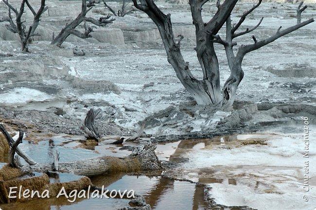 Продолжаю делится впечатлениями от поездки в Йе́ллоустон (Yellowstone National Park)— международный биосферный заповедник, объект Всемирного Наследия ЮНЕСКО, первый в мире национальный парк (основан 1 марта 1872 года). Находится в США, на территории штатов Вайоминг, Монтана и Айдахо. Парк знаменит многочисленными гейзерами и другими геотермическими объектами, богатой живой природой, живописными ландшафтами. ( взято из Википедии ) Мы останавливались в кемпингах в палатках. Парк произвел на нас огромное впечатление. Очень хочется поделится с вами красотой которую я увидела. В один фоторепортаж трудно вместить все увиденное поэтому это уже четвертый и будут еще...  фото 12