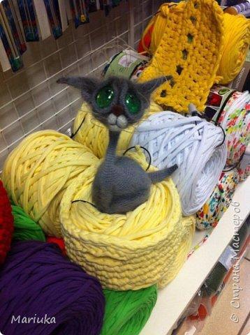 Кошек много не бывает. Хочу представить на Ваш суд своих котов по описанию Светланы Перцевой. фото 12