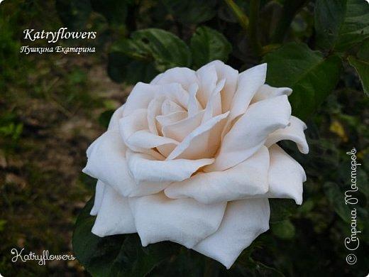 """Люблю я фотографировать свои цветы в самых неожиданных местах - например, на клумбе. С моей маленькой подружкой мы обегали всю клумбу, и сейчас из ста сделанных фотографий вы видите самые лучшие.  Две чудесные """"герцогини"""" на одном кусте)) Пока это просто две розы, а вот что сделать с ними, я еще не придумала. Если у вас появится неожиданная и оригинальная мысль - сразу пишите мне.   фото 2"""