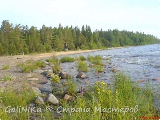 Каким бы лето не было –  в нём есть чему любоваться! В июне, июле и для меня нашлось … Река Луга в Ленинградской области.  фото 58