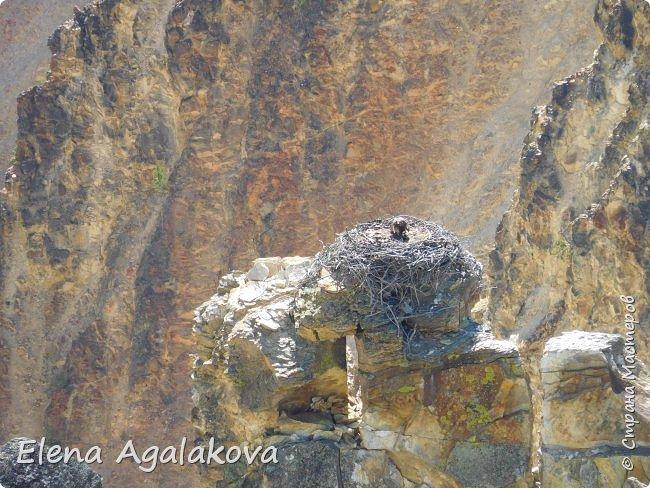 Продолжаю делится впечатлениями от поездки в Йе́ллоустон (Yellowstone National Park)— международный биосферный заповедник, объект Всемирного Наследия ЮНЕСКО, первый в мире национальный парк (основан 1 марта 1872 года). Находится в США, на территории штатов Вайоминг, Монтана и Айдахо. Парк знаменит многочисленными гейзерами и другими геотермическими объектами, богатой живой природой, живописными ландшафтами. ( взято из Википедии ) Мы останавливались в кемпингах в палатках. Парк произвел на нас огромное впечатление. Очень хочется поделится с вами красотой которую я увидела. В один фоторепортаж трудно вместить все увиденное поэтому это уже пятый и будут еще... В этот раз я покажу фото Большого каньона парка Йеллоустон.  Жалко что при загрузке фото уменьшаются и теряется качество поэтому смотрятся картинки плоско... но с этим я ничего поделать не могу. фото 6