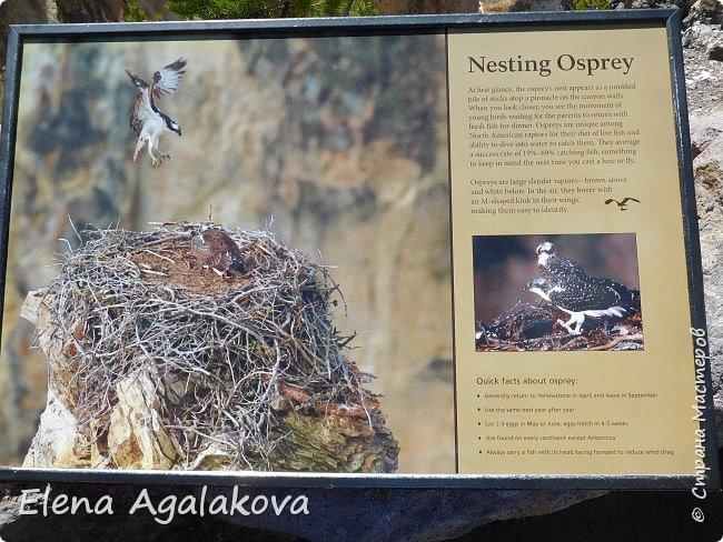 Продолжаю делится впечатлениями от поездки в Йе́ллоустон (Yellowstone National Park)— международный биосферный заповедник, объект Всемирного Наследия ЮНЕСКО, первый в мире национальный парк (основан 1 марта 1872 года). Находится в США, на территории штатов Вайоминг, Монтана и Айдахо. Парк знаменит многочисленными гейзерами и другими геотермическими объектами, богатой живой природой, живописными ландшафтами. ( взято из Википедии ) Мы останавливались в кемпингах в палатках. Парк произвел на нас огромное впечатление. Очень хочется поделится с вами красотой которую я увидела. В один фоторепортаж трудно вместить все увиденное поэтому это уже пятый и будут еще... В этот раз я покажу фото Большого каньона парка Йеллоустон.  Жалко что при загрузке фото уменьшаются и теряется качество поэтому смотрятся картинки плоско... но с этим я ничего поделать не могу. фото 7