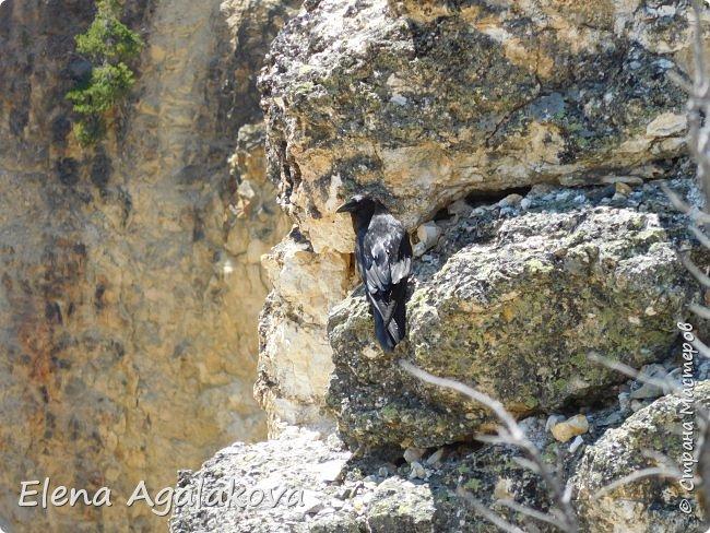 Продолжаю делится впечатлениями от поездки в Йе́ллоустон (Yellowstone National Park)— международный биосферный заповедник, объект Всемирного Наследия ЮНЕСКО, первый в мире национальный парк (основан 1 марта 1872 года). Находится в США, на территории штатов Вайоминг, Монтана и Айдахо. Парк знаменит многочисленными гейзерами и другими геотермическими объектами, богатой живой природой, живописными ландшафтами. ( взято из Википедии ) Мы останавливались в кемпингах в палатках. Парк произвел на нас огромное впечатление. Очень хочется поделится с вами красотой которую я увидела. В один фоторепортаж трудно вместить все увиденное поэтому это уже пятый и будут еще... В этот раз я покажу фото Большого каньона парка Йеллоустон.  Жалко что при загрузке фото уменьшаются и теряется качество поэтому смотрятся картинки плоско... но с этим я ничего поделать не могу. фото 14