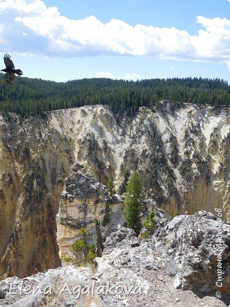 Продолжаю делится впечатлениями от поездки в Йе́ллоустон (Yellowstone National Park)— международный биосферный заповедник, объект Всемирного Наследия ЮНЕСКО, первый в мире национальный парк (основан 1 марта 1872 года). Находится в США, на территории штатов Вайоминг, Монтана и Айдахо. Парк знаменит многочисленными гейзерами и другими геотермическими объектами, богатой живой природой, живописными ландшафтами. ( взято из Википедии ) Мы останавливались в кемпингах в палатках. Парк произвел на нас огромное впечатление. Очень хочется поделится с вами красотой которую я увидела. В один фоторепортаж трудно вместить все увиденное поэтому это уже пятый и будут еще... В этот раз я покажу фото Большого каньона парка Йеллоустон.  Жалко что при загрузке фото уменьшаются и теряется качество поэтому смотрятся картинки плоско... но с этим я ничего поделать не могу. фото 15