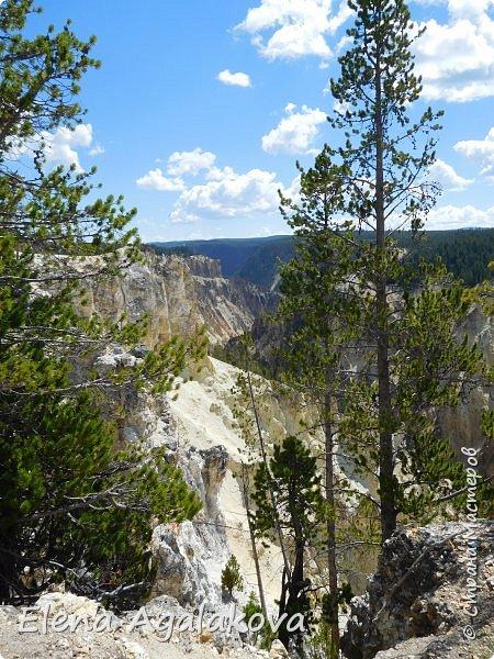 Продолжаю делится впечатлениями от поездки в Йе́ллоустон (Yellowstone National Park)— международный биосферный заповедник, объект Всемирного Наследия ЮНЕСКО, первый в мире национальный парк (основан 1 марта 1872 года). Находится в США, на территории штатов Вайоминг, Монтана и Айдахо. Парк знаменит многочисленными гейзерами и другими геотермическими объектами, богатой живой природой, живописными ландшафтами. ( взято из Википедии ) Мы останавливались в кемпингах в палатках. Парк произвел на нас огромное впечатление. Очень хочется поделится с вами красотой которую я увидела. В один фоторепортаж трудно вместить все увиденное поэтому это уже пятый и будут еще... В этот раз я покажу фото Большого каньона парка Йеллоустон.  Жалко что при загрузке фото уменьшаются и теряется качество поэтому смотрятся картинки плоско... но с этим я ничего поделать не могу. фото 16