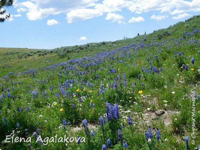 Продолжаю делится впечатлениями от поездки в Йе́ллоустон (Yellowstone National Park)— международный биосферный заповедник, объект Всемирного Наследия ЮНЕСКО, первый в мире национальный парк (основан 1 марта 1872 года). Находится в США, на территории штатов Вайоминг, Монтана и Айдахо. Парк знаменит многочисленными гейзерами и другими геотермическими объектами, богатой живой природой, живописными ландшафтами. ( взято из Википедии ) Мы останавливались в кемпингах в палатках. Парк произвел на нас огромное впечатление. Очень хочется поделится с вами красотой которую я увидела. В один фоторепортаж трудно вместить все увиденное поэтому это уже пятый и будут еще... В этот раз я покажу фото Большого каньона парка Йеллоустон.  Жалко что при загрузке фото уменьшаются и теряется качество поэтому смотрятся картинки плоско... но с этим я ничего поделать не могу. фото 28