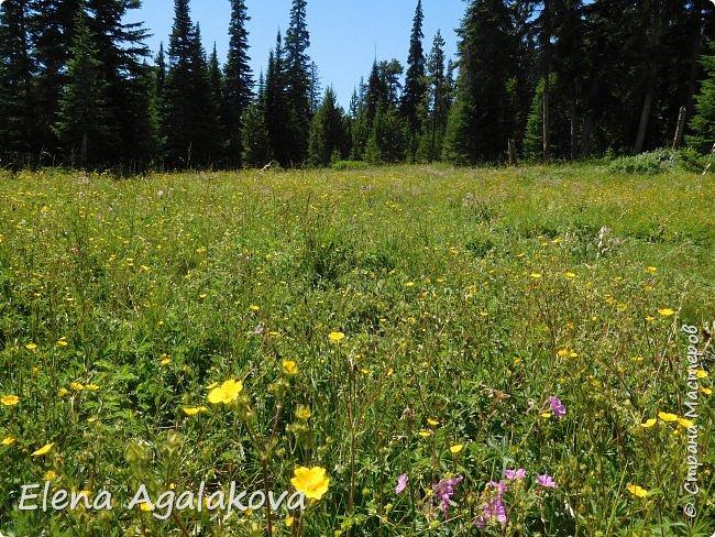 Продолжаю делится впечатлениями от поездки в Йе́ллоустон (Yellowstone National Park)— международный биосферный заповедник, объект Всемирного Наследия ЮНЕСКО, первый в мире национальный парк (основан 1 марта 1872 года). Находится в США, на территории штатов Вайоминг, Монтана и Айдахо. Парк знаменит многочисленными гейзерами и другими геотермическими объектами, богатой живой природой, живописными ландшафтами. ( взято из Википедии ) Мы останавливались в кемпингах в палатках. Парк произвел на нас огромное впечатление. Очень хочется поделится с вами красотой которую я увидела. В один фоторепортаж трудно вместить все увиденное поэтому это уже пятый и будут еще... В этот раз я покажу фото Большого каньона парка Йеллоустон.  Жалко что при загрузке фото уменьшаются и теряется качество поэтому смотрятся картинки плоско... но с этим я ничего поделать не могу. фото 34