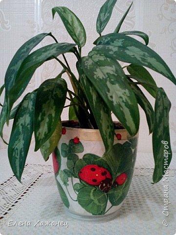 Цветочные горшочки фото 2