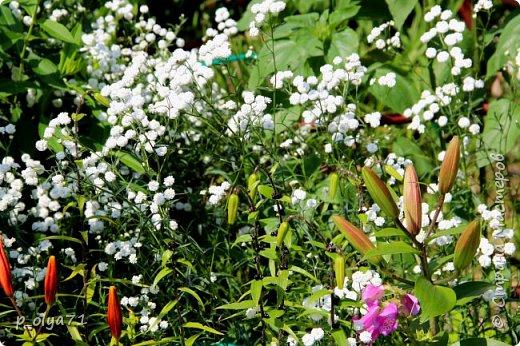 Здравствуйте,мои дорогие!!! Лето наступило,цветочки постепенно распускаются,вот и хочу я показать,что у меня раскрылось за период 25.07.17-01.08.17 ))) 25.07.17 Настурция. фото 27