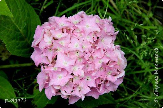 Здравствуйте,мои дорогие!!! Лето наступило,цветочки постепенно распускаются,вот и хочу я показать,что у меня раскрылось за период 25.07.17-01.08.17 ))) 25.07.17 Настурция. фото 53