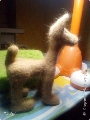 Представляю вашему вниманию моё первое длинношерстое животное)). фото 2
