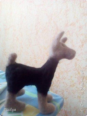 Представляю вашему вниманию моё первое длинношерстое животное)). фото 3