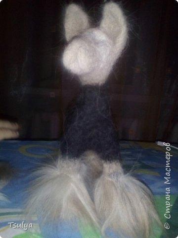 Представляю вашему вниманию моё первое длинношерстое животное)). фото 4