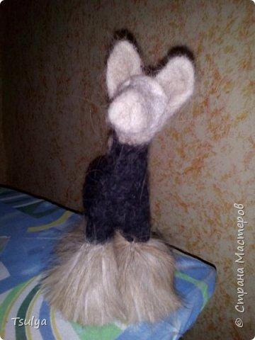 Представляю вашему вниманию моё первое длинношерстое животное)). фото 5