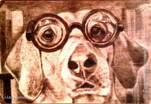 Умный пес фото 1