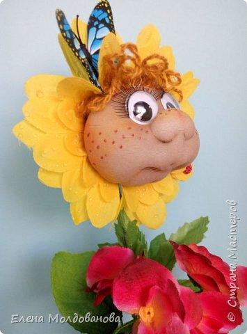 Сезон цветения подсолнухов открыт фото 6