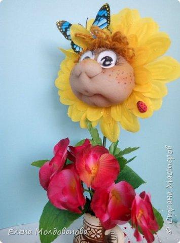 Сезон цветения подсолнухов открыт фото 7
