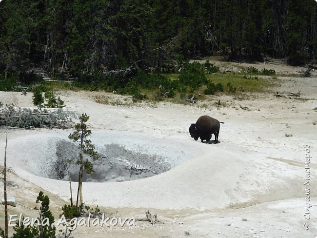 Продолжаю делится впечатлениями от поездки в Йе́ллоустон (Yellowstone National Park)— международный биосферный заповедник, объект Всемирного Наследия ЮНЕСКО, первый в мире национальный парк (основан 1 марта 1872 года). Находится в США, на территории штатов Вайоминг, Монтана и Айдахо. Парк знаменит многочисленными гейзерами и другими геотермическими объектами, богатой живой природой, живописными ландшафтами. ( взято из Википедии ) Мы останавливались в кемпингах в палатках. Парк произвел на нас огромное впечатление. Очень хочется поделится с вами красотой которую я увидела. В один фоторепортаж трудно вместить все увиденное поэтому это уже шестой и будут еще...  Жалко что при загрузке фото уменьшаются и теряется качество поэтому смотрятся картинки плоско... но с этим я ничего поделать не могу. фото 30