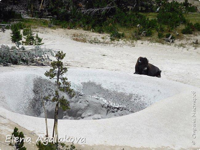 Продолжаю делится впечатлениями от поездки в Йе́ллоустон (Yellowstone National Park)— международный биосферный заповедник, объект Всемирного Наследия ЮНЕСКО, первый в мире национальный парк (основан 1 марта 1872 года). Находится в США, на территории штатов Вайоминг, Монтана и Айдахо. Парк знаменит многочисленными гейзерами и другими геотермическими объектами, богатой живой природой, живописными ландшафтами. ( взято из Википедии ) Мы останавливались в кемпингах в палатках. Парк произвел на нас огромное впечатление. Очень хочется поделится с вами красотой которую я увидела. В один фоторепортаж трудно вместить все увиденное поэтому это уже шестой и будут еще...  Жалко что при загрузке фото уменьшаются и теряется качество поэтому смотрятся картинки плоско... но с этим я ничего поделать не могу. фото 33