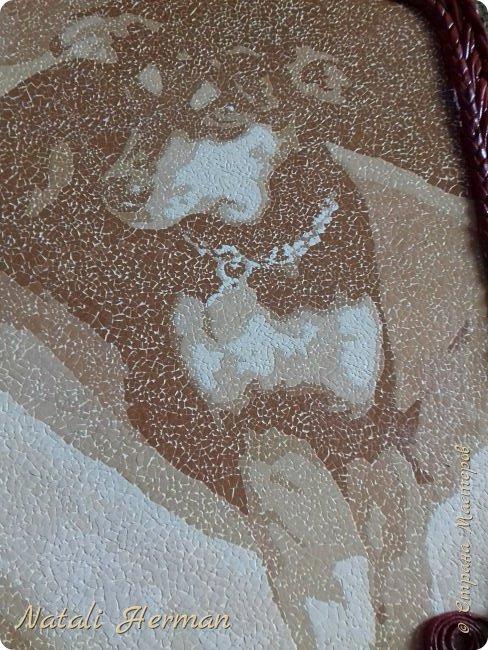 Собачка по кличке Майя! фото 3
