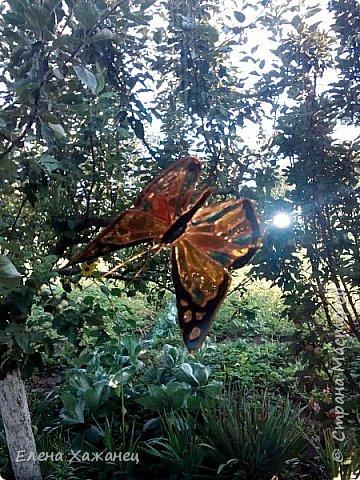 Объемные бабочки фото 2
