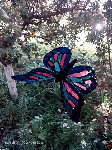 Объемные бабочки фото 1