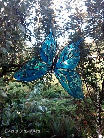 Объемные бабочки фото 3