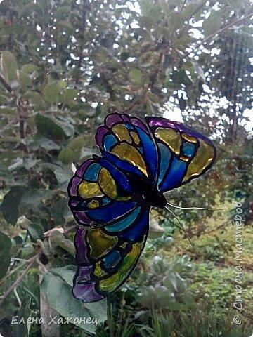 Объемные бабочки фото 6