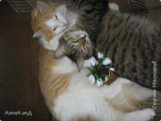 Подснежники и кошки фото 1