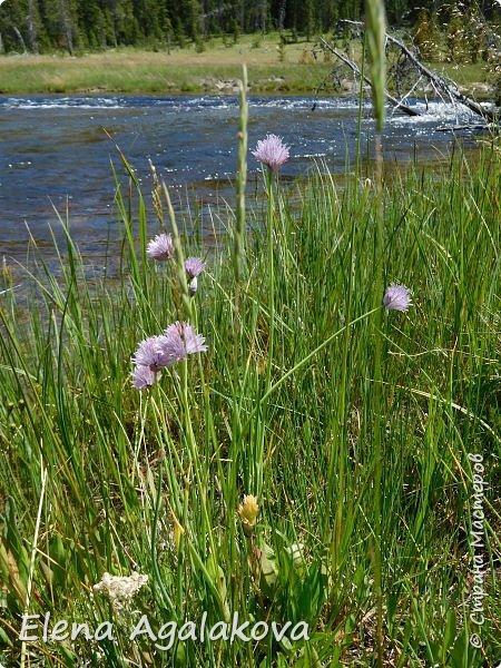 Продолжаю делится впечатлениями от поездки в Йе́ллоустон (Yellowstone National Park)— международный биосферный заповедник, объект Всемирного Наследия ЮНЕСКО, первый в мире национальный парк (основан 1 марта 1872 года). Находится в США, на территории штатов Вайоминг, Монтана и Айдахо. Парк знаменит многочисленными гейзерами и другими геотермическими объектами, богатой живой природой, живописными ландшафтами. ( взято из Википедии ) Мы останавливались в кемпингах в палатках. Парк произвел на нас огромное впечатление. Очень хочется поделится с вами красотой которую я увидела. В один фоторепортаж трудно вместить все увиденное поэтому это уже седьмой, последний.  Сегодня я расскажу про Гейзер Одинокая звезда (Lone Star Geyser )  Жалко что при загрузке фото уменьшаются и теряется качество поэтому смотрятся картинки плоско... но с этим я ничего поделать не могу. фото 12