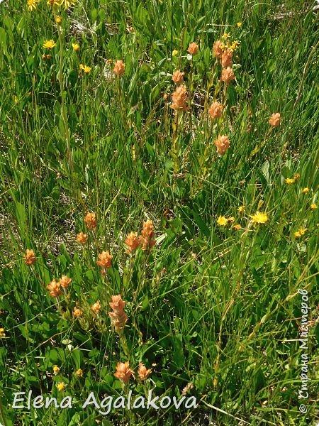 Продолжаю делится впечатлениями от поездки в Йе́ллоустон (Yellowstone National Park)— международный биосферный заповедник, объект Всемирного Наследия ЮНЕСКО, первый в мире национальный парк (основан 1 марта 1872 года). Находится в США, на территории штатов Вайоминг, Монтана и Айдахо. Парк знаменит многочисленными гейзерами и другими геотермическими объектами, богатой живой природой, живописными ландшафтами. ( взято из Википедии ) Мы останавливались в кемпингах в палатках. Парк произвел на нас огромное впечатление. Очень хочется поделится с вами красотой которую я увидела. В один фоторепортаж трудно вместить все увиденное поэтому это уже седьмой, последний.  Сегодня я расскажу про Гейзер Одинокая звезда (Lone Star Geyser )  Жалко что при загрузке фото уменьшаются и теряется качество поэтому смотрятся картинки плоско... но с этим я ничего поделать не могу. фото 11