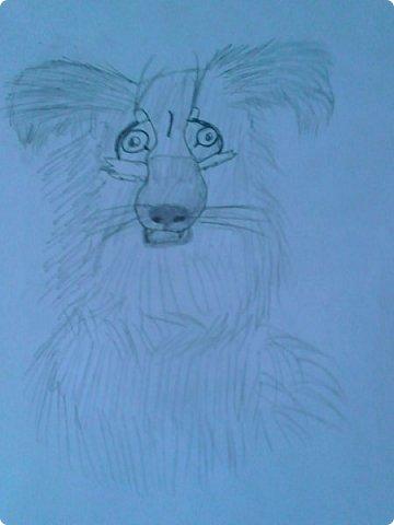 Добрый день! Сегодня я покажу вам мои новые рисунки. (Предупреждаю, что может быть плохое качество.)  Это ротвейлер.  фото 9