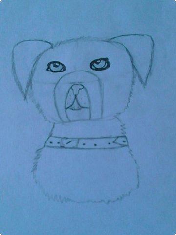 Добрый день! Сегодня я покажу вам мои новые рисунки. (Предупреждаю, что может быть плохое качество.)  Это ротвейлер.  фото 1
