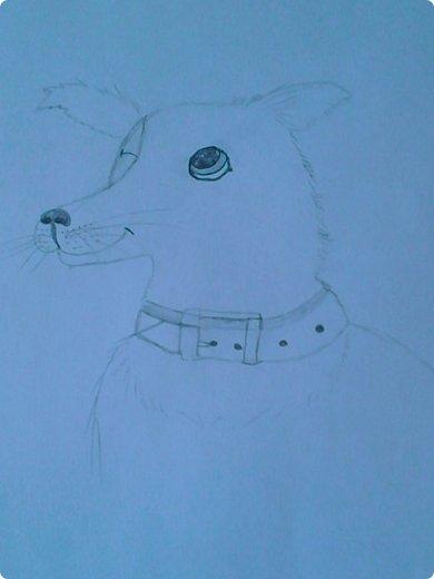 Добрый день! Сегодня я покажу вам мои новые рисунки. (Предупреждаю, что может быть плохое качество.)  Это ротвейлер.  фото 21