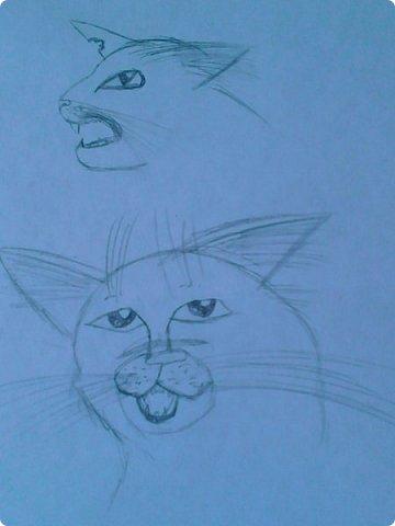 Добрый день! Сегодня я покажу вам мои новые рисунки. (Предупреждаю, что может быть плохое качество.)  Это ротвейлер.  фото 23
